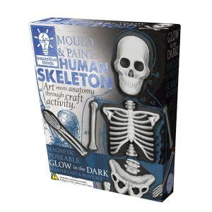 Mould And Paint Human Skeleton