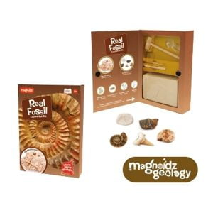 Real Fossil Dig Science Kit